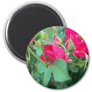 Rose Bud with Water Droplet Magnet magnet