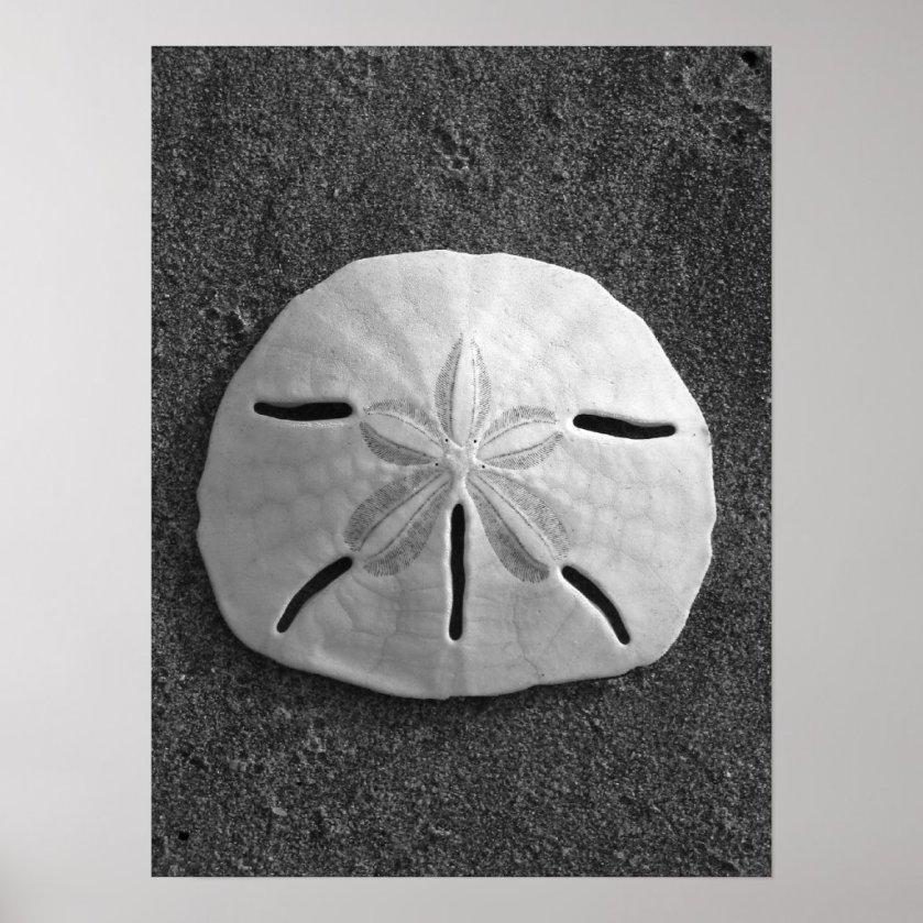 Sand Dollar (Black and White) Poster