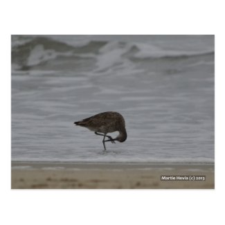 Sandpiper Bows Postcards