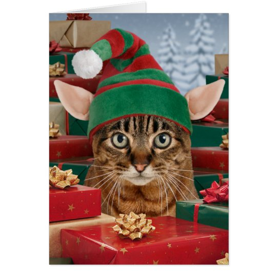Santas Elf Cat Christmas Card Zazzle