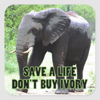 Save a Life, Don't Buy Ivory Square Sticker