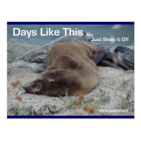 Sea Lion - Days Like This - Postcard
