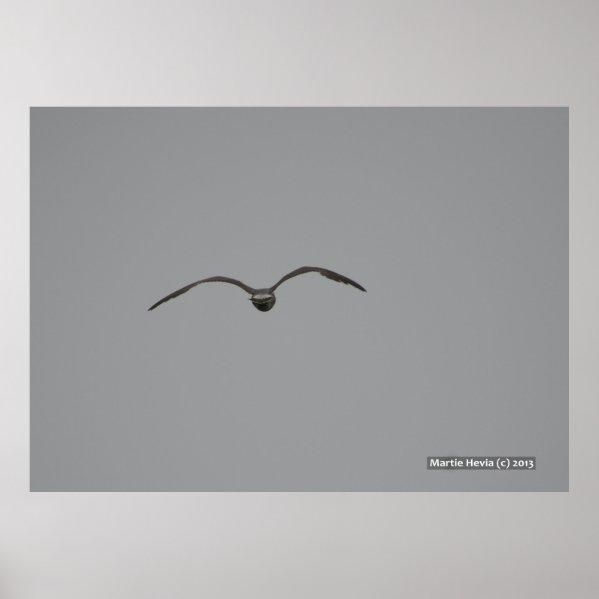 Seagull in Flight Print