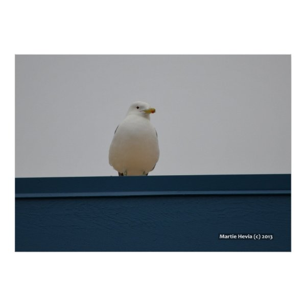 Seagull on a Blue Roof II Print