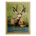 Sequoia National Park Deer Vintage Travel Poster
