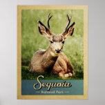 Sequoia National Park Deer Vintage Travel Poster