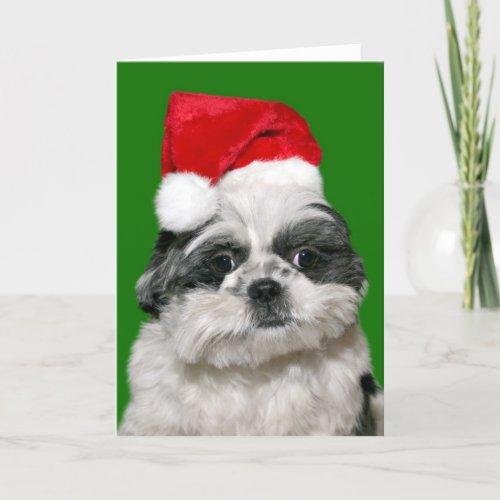 Printable Birthday Cards With Shitzu 9jasports