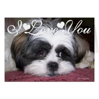 Shih Tzu Dog Photo Image I Love You Greeting Cards