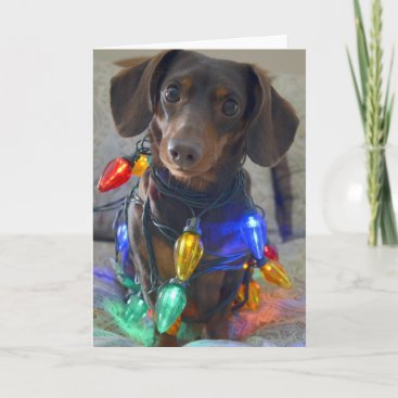 Silly Dachshund tangled in Christmas Lights Holiday Card