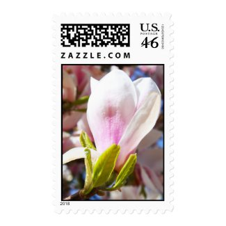 Single Magnolia zazzle_stamp