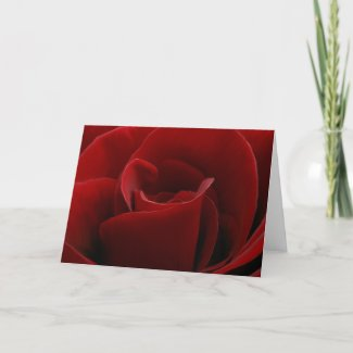 Single Red Rose Card