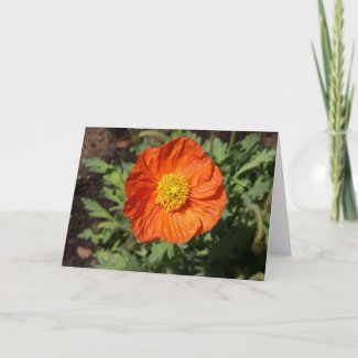 Small Orange Poppy Card card