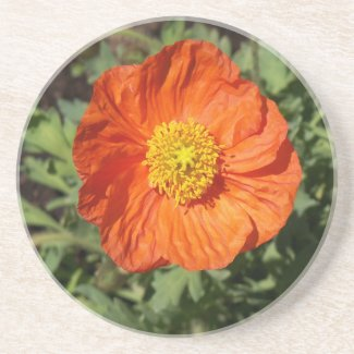 Small Orange Poppy Coaster coaster