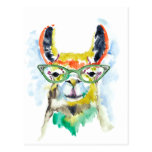 Smarty-Pants Llama Postcard