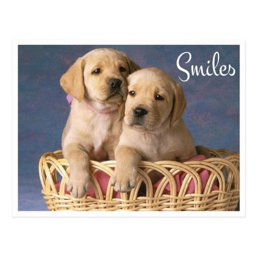 Smiles Hello Yellow Labrador Retriever Puppy Dog Postcard