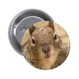 Smiling Squirrel button