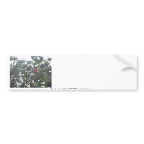 Snow Covered Holly bumpersticker