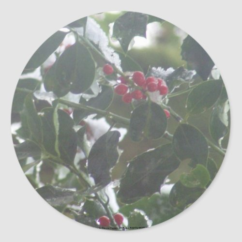 Snow Covered Holly sticker