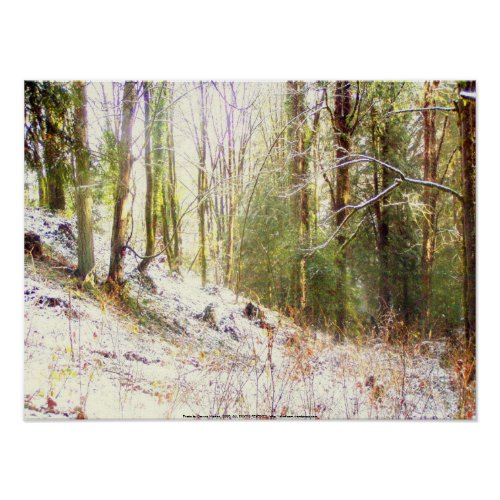 Snowy Sunlit Forest Glade #2 print