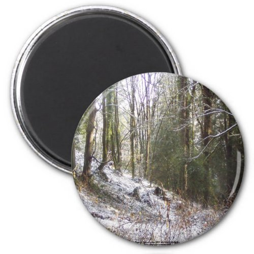 Snowy Sunlit Forest Glade magnet
