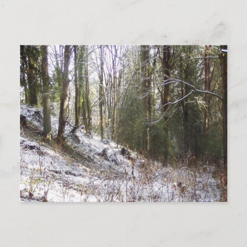 Snowy Sunlit Forest Glade postcard
