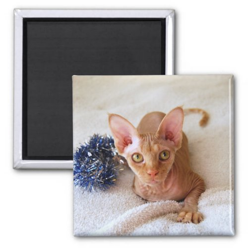 Sphinx Cat With Blue Tinsel Magnet magnet