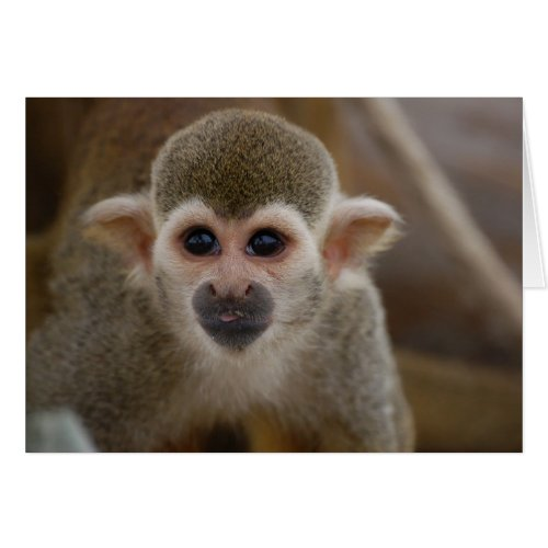 Spider Monkey card