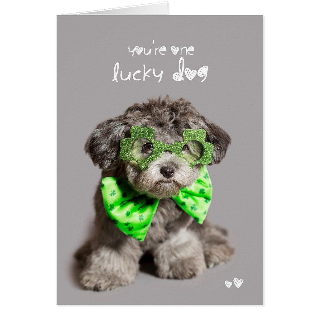 St Patricks Day Lucky Dog