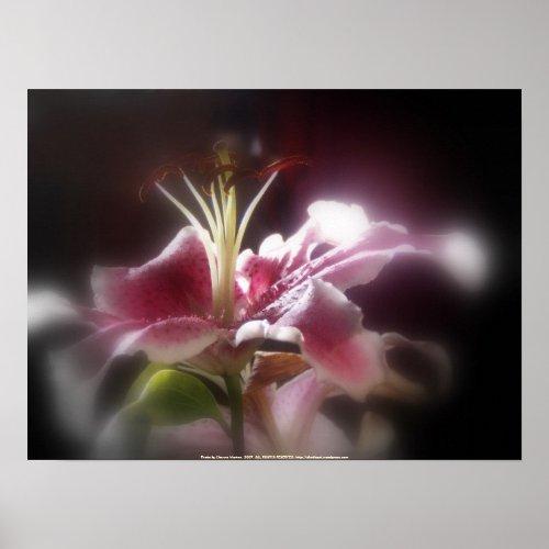 stargazer lilies #12 print