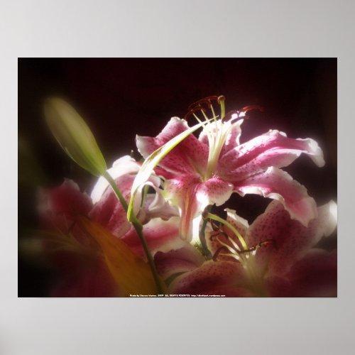 stargazer lilies #17 print