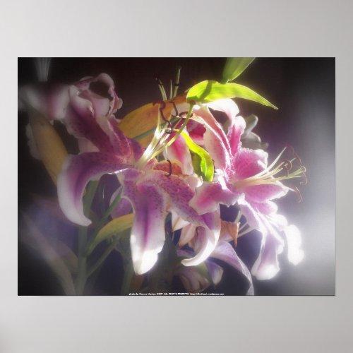 Stargazer Lilies #20 print