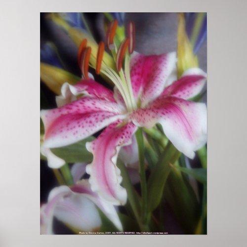 stargazer lilies #6 print