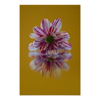 Striped Daisy Gerbra pink yellow Print print