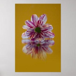 Striped Daisy Gerbra pink yellow Print print