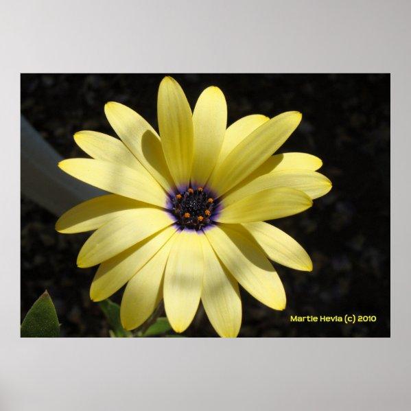 Sun on a Yellow Daisy print