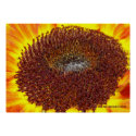 Sunflower Center Print