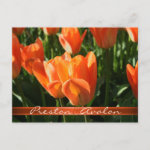 Sunny Orange Tulips Save The Date Postcard