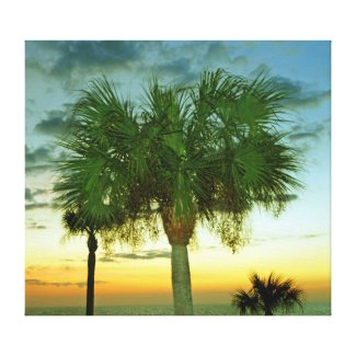 Sunset Palms on Gulf Coast near Clearwater -canvas Canvas Print