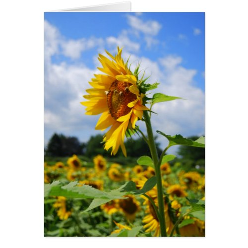 Tall Sunflower Card card