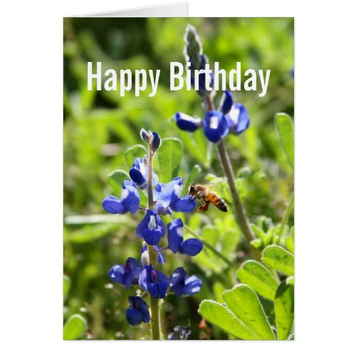 Texas Bluebonnet Happy Birthday Greeting Cards