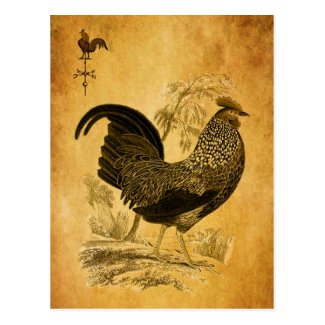 Thanksgiving Rooster Postcard