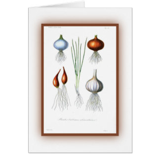 The Allium Family Cards