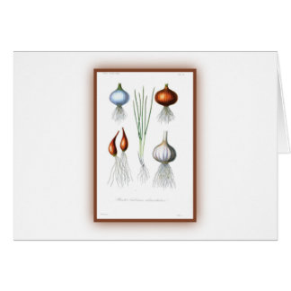 The Allium Family Greeting Card