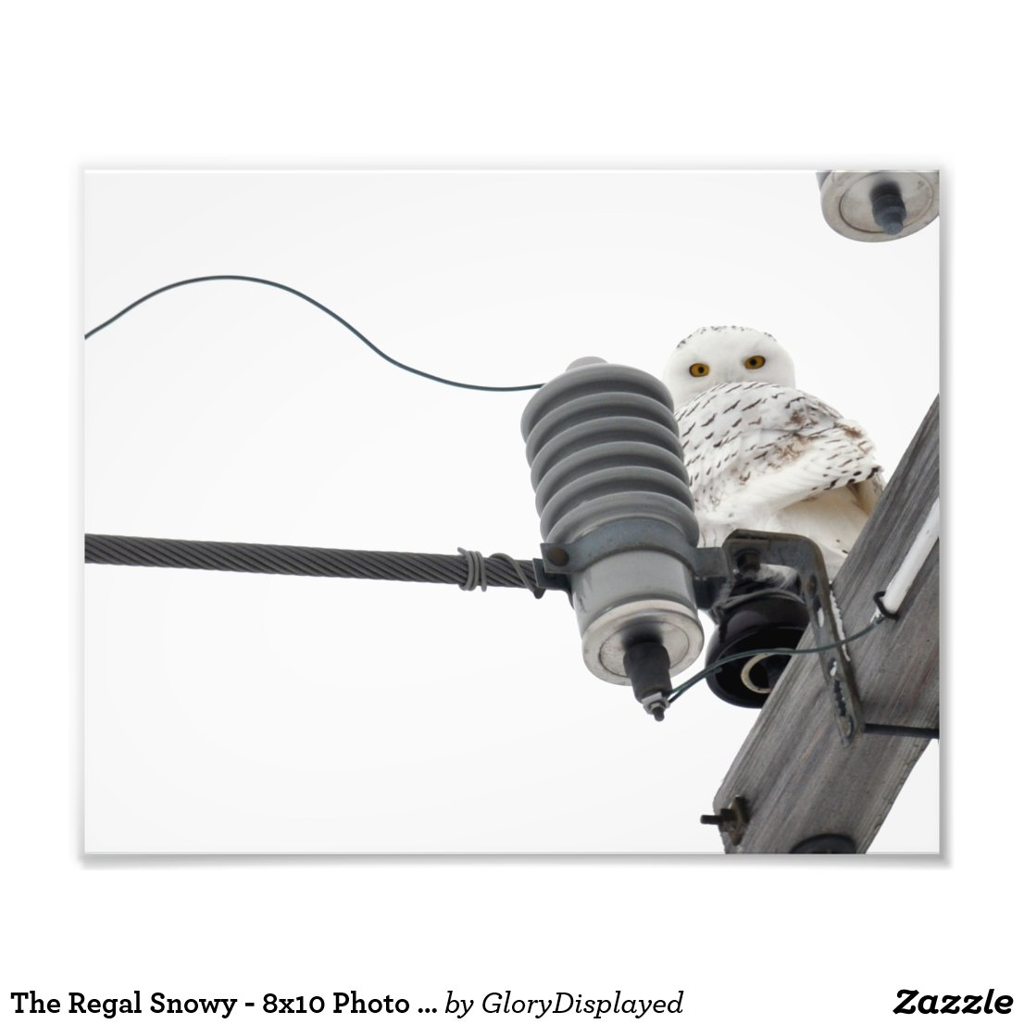 The Regal Snowy - 8x10 Photo Print