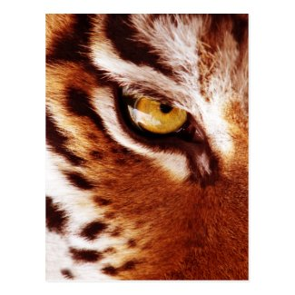 The Tiger's Eye Photograph Postcard
