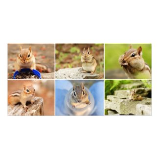 Theo the Amigo Chipmunk Collage Photo Cards