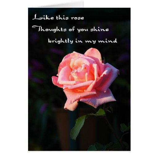 Thoughts Of You Rose Card Zazzle