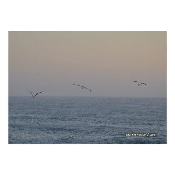 Three Seagulls Posters
