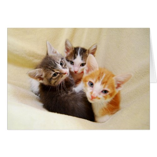 Trio of Kittens card
