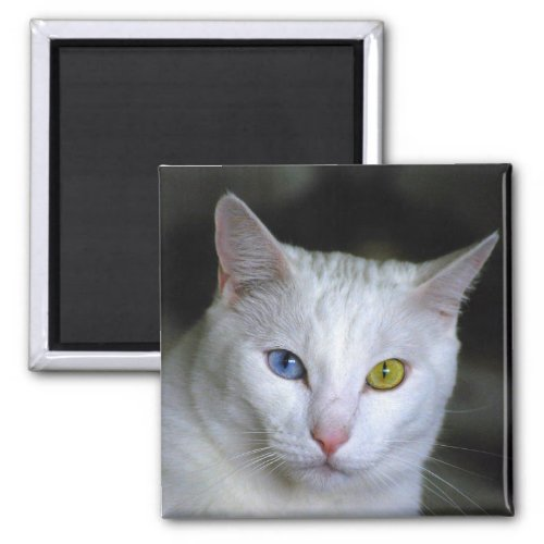 Turkish Angora Cat Magnet magnet
